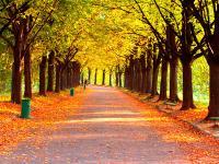 """描写""""秋天""""的好词好句"""