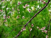 """描写""""春天""""的好词好句"""