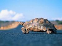 乌龟能比兔子说出更多有关道路的情况