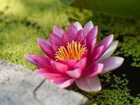 如果把一生比作一朵花的生长过程
