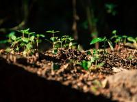 冬天的种子,春天的梦想
