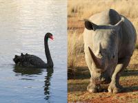 """看不见的""""黑天鹅""""和被忽视的""""灰犀牛"""""""