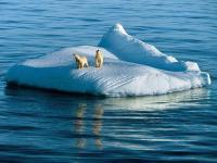 全球变暖加剧,北极熊20年后或将灭绝